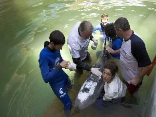 Mary G. è morta. Il delfino salvato sette anni fa da Fondazione Cetacea