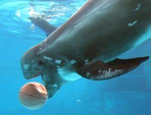 Morte Mary G. Pari (Cetacea): uccisa dalla troppa presunzione