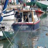Reti da pesca abusive. Liberate 150 seppie e altri pesci intrappolati