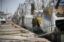 Fermo Pesca. Incontro tra Ministero e sindacati: confermata Cassa Integrazione