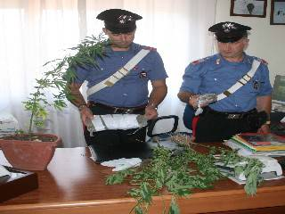 I carabinieri intervengono per una lite, trovano piantagione di marijuana