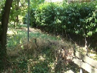 Nè pubblico nè privato: giardino in degrado per un codice errato al catasto