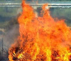 Vigneto distrutto dalle fiamme. Denunciata 70enne per incendio colposo