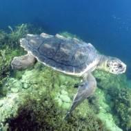 A Riccione il primo incontro della rete regionale per tartarughe marine