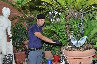 Ladro di piante incastrato dal cactus. Il bottino in terrazzo