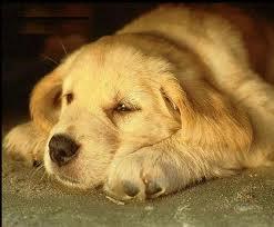 Padroni in difficoltà? Sterilizzazione gratuita per i loro cagnolini