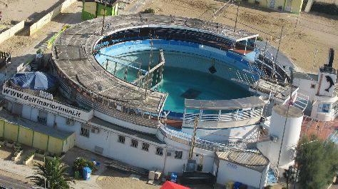 Delfinario, il fronte animalista si mobilita. ENPA chiede accesso a atti