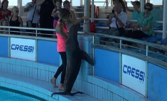 Il delfinario ha riaperto con le otarie: al debutto Ringhio, Sneezy e Foxy