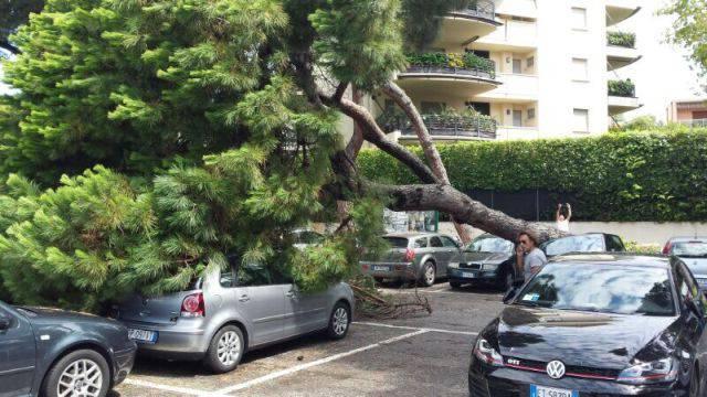 Grande pino si abbatte su auto parcheggiate nel piazzale della stazione