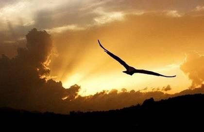 Libera le Ali: progetto socio-terapeutico legato al mondo del volo