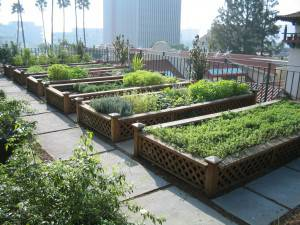 Urban-agriculture-raised-beds
