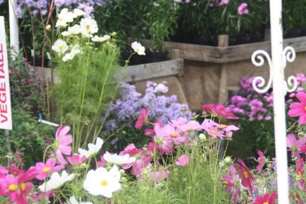 Giardini d autore appuntamento a rimini dal al marzo