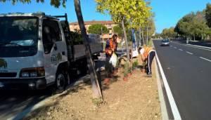 Rotatorie prolungamento via Roma, in corso lavori sul verde