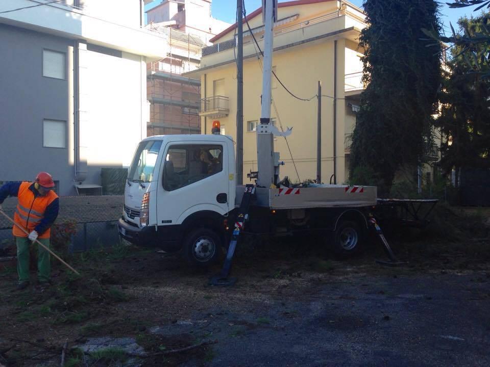 Rimossi quattro alberi a rischio vicino al Municipio di Riccione