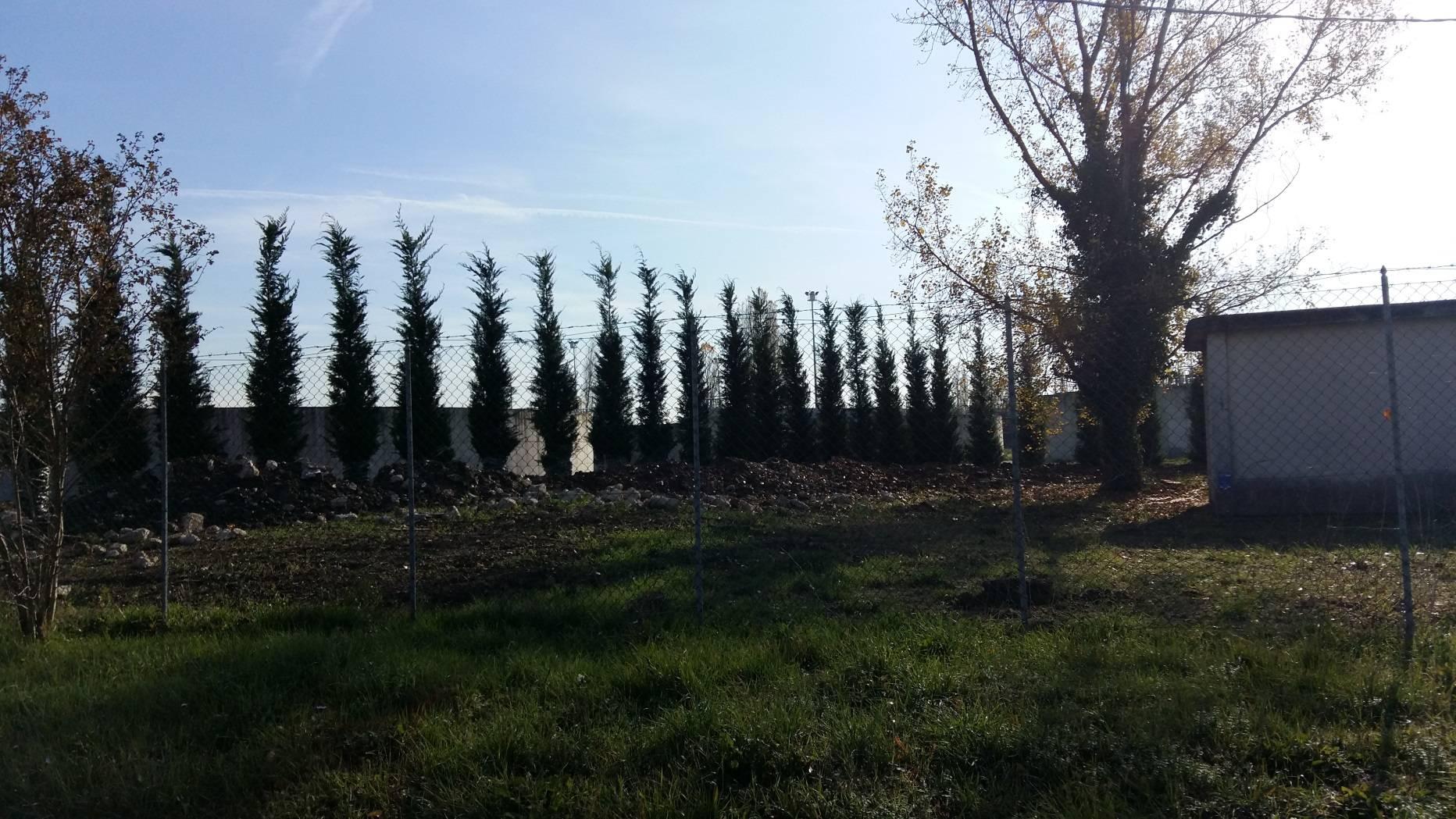 Mitigazione depuratore Santa Giustina: piantumati 349 alberi
