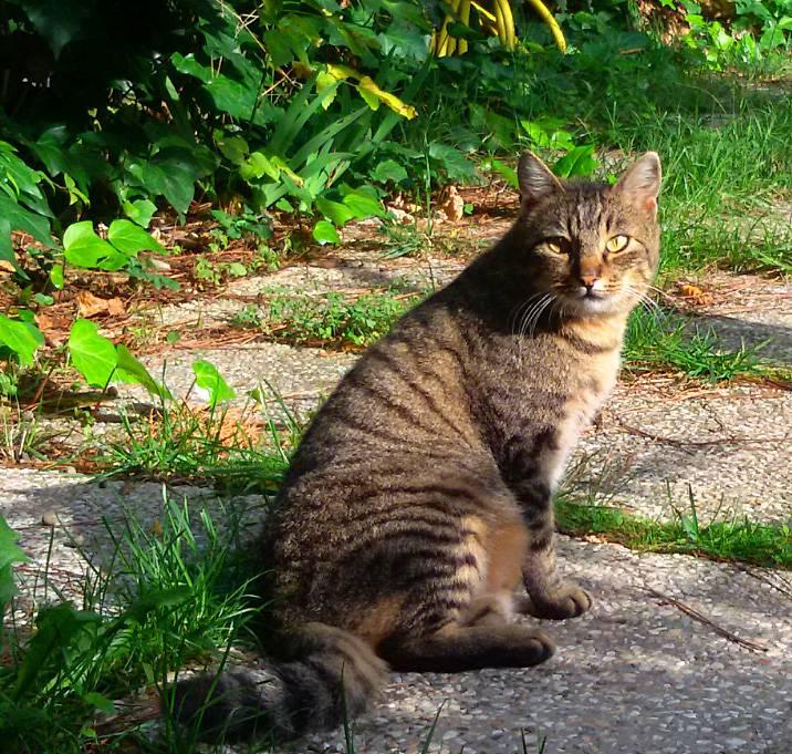 Al Cerni 150 gatti affidati nel 2016. Tripy cerca casa