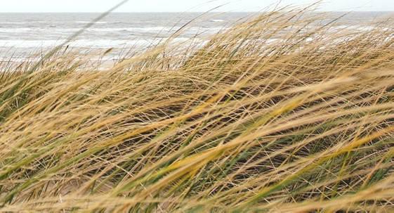 Vento e stato del mare, nuova allerta di 24 ore