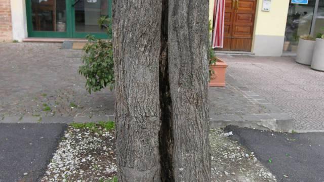 In via Marini abbattimento per 10 alberi instabili