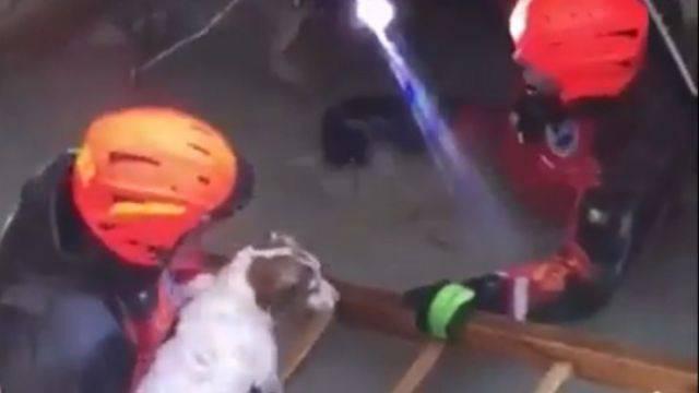 Vigili del Fuoco salvano cane risucchiato dentro scarico