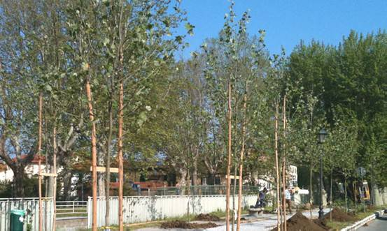 Verde pubblico e manutenzioni: al via interventi per 400.000 euro