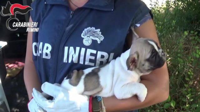 12 cuccioli nascosti nel sedile di un carroattrezzi