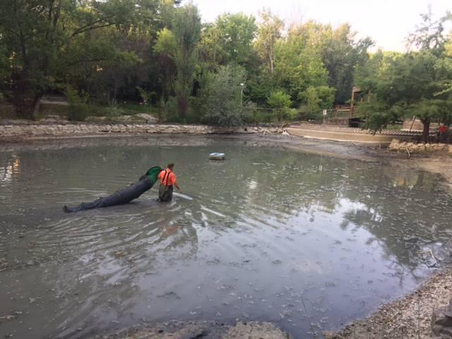 Laghetto in secca al parco della resistenza pesci for Depuratore acqua tartarughe