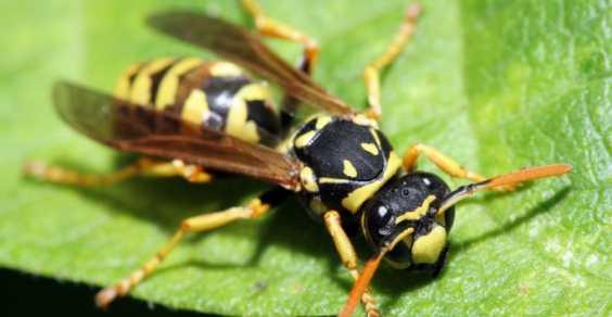 64enne muore a savignano per puntura di insetto for Puntura vespa cane