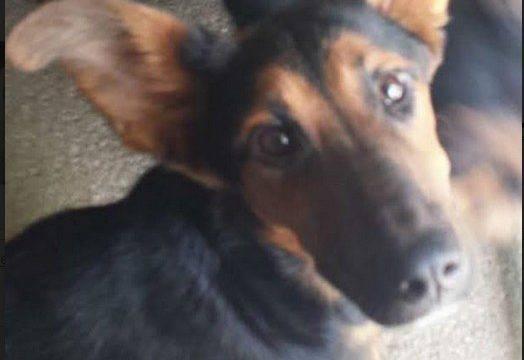 La Polizia Municipale recupera sei cuccioli vaganti