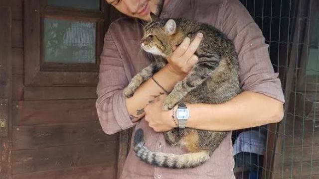 La storia a lieto fine della gattina Tracy/Paffy
