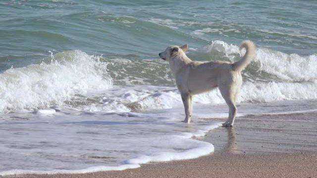 Spiagge dog friendly, le indicazioni dell'Ausl. Cani in acqua ma solo coi detentori