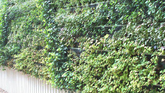 "Viale Portovenere: giù i pini, arrivano i ""green wall"""