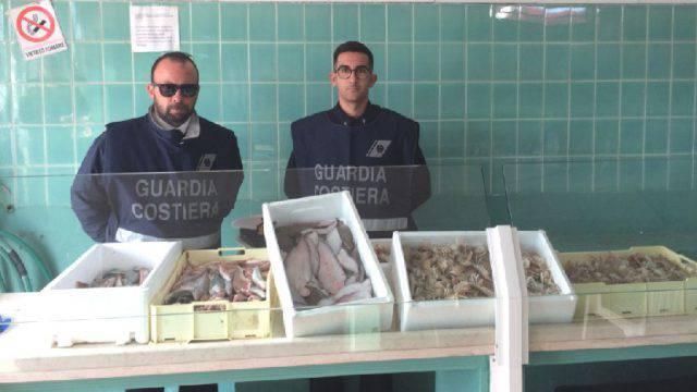 Pescato senza tracciabilità, sequestri a Riccione