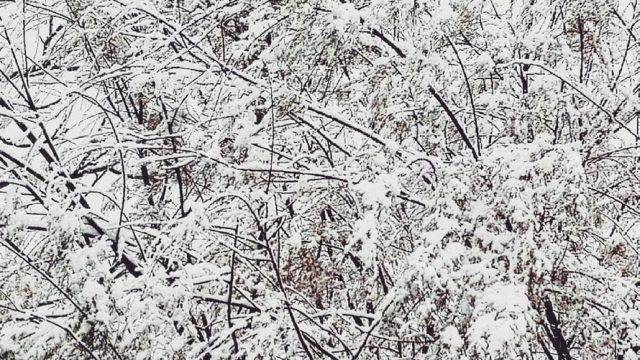 Meteo Emilia Romagna, torna la neve anche in pianura