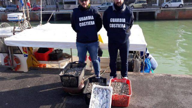 Guardia Costiera sequestra 20 kg di prodotto ittico non in regola