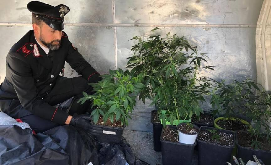 Serra artigianale con 22 piante di canapa, un arresto dei Carabinieri