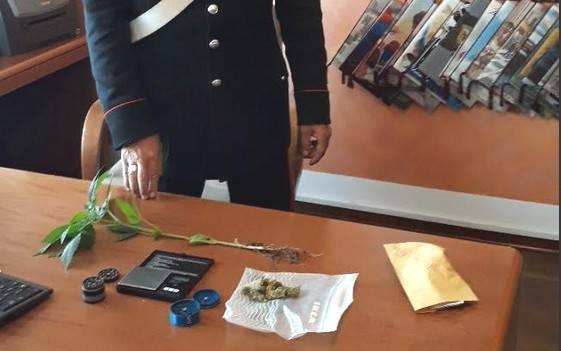 Pianta di marijuana in bella mostra sul terrazzo, denunciato 29enne