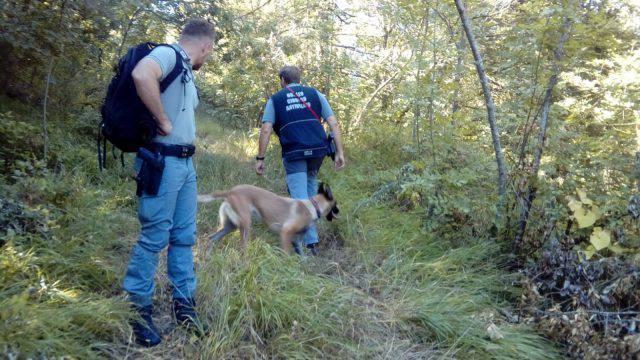 Cane da caccia avvelenato a Sant'Agata. Forestali inviano cani specializzati