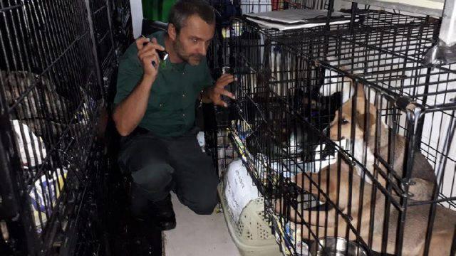 """""""Staffetta"""" di animali intercettata dalle Guardie Ecozoofile in A14"""