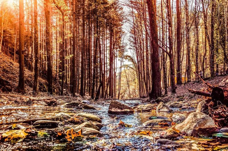 Autunno: dove andare a caccia di foliage nelle foreste dell'Appennino Tosco Emiliano