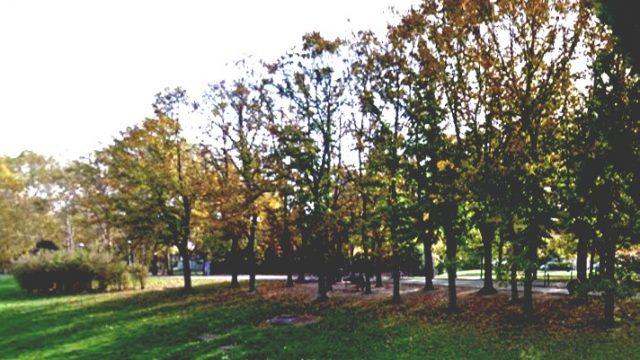 Mille firme a difesa degli alberi nei parchi