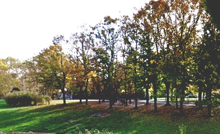 PSBO e parchi. Ridotte del 60% le piante interessate dagli scavi