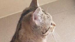 Per il gattino Bolle tanta solidarietà e intervento riuscito