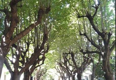 A Bellaria si interviene su piante danneggiate o malate