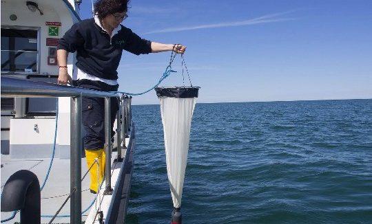 Report Adriatico 2018: acque buone in un sistema che resta delicato