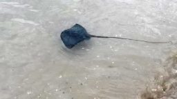 Trigoni sulla costa riminese, come comportarsi