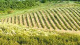 Cresce l'agricoltura biologica riminese